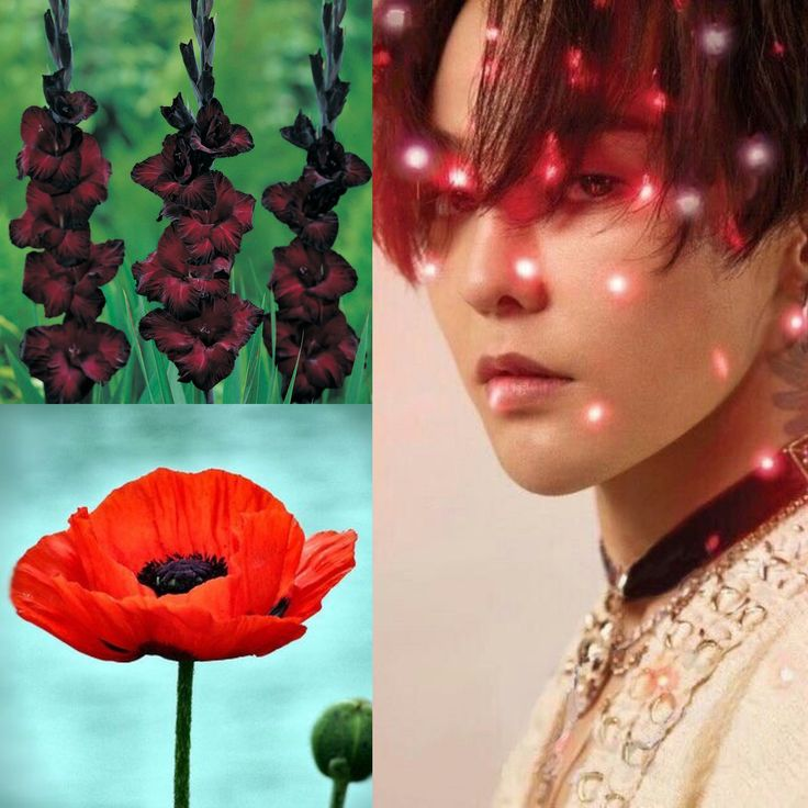 BirthFlower&KPOP // Gladiolus & Poppies // GDragon of BigBang