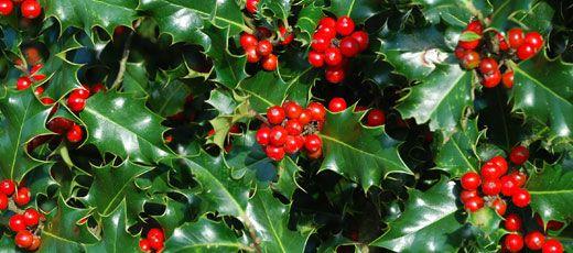 La tradición de la Navidad en España está llena de fiestas y tradiciones originales, como las Hogueras, Nacimiento y los Reyes Magos. - www.donquijote.org/culture/spain/society/holidays/christmas-in-spain_es.asp