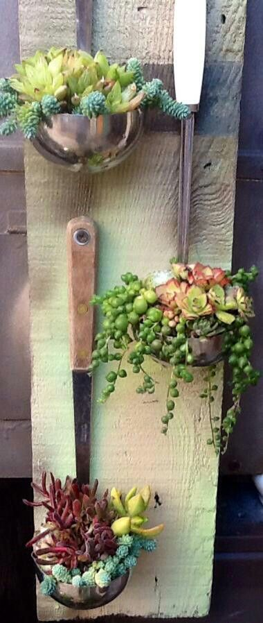 Ladles of succulents