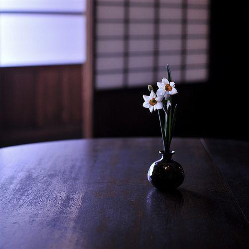 maako:  シ.ツ.ラ.エ.ル (by kiyo☼)