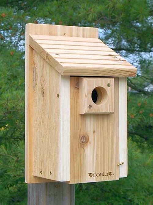 1000 ideas about bluebird houses on pinterest for Song bird house plans