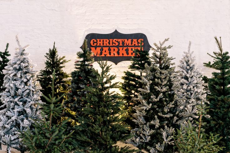 Pining for Christmas? From real to fake, green to white, you're sure to find a tree to delight!