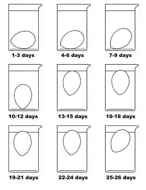 how to tell how old your eggs are.