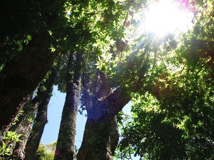 木漏れ日と蝉時雨