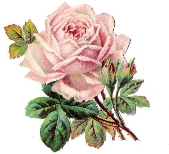 698 Best Paper Crafts--flowers Images On Pinterest