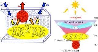 東京工業大学は1月9日、豊田中央研究所との共同研究により、2段階のエネルギー移動で、光を効率よく捕集する分子システムを開発したと発表した。