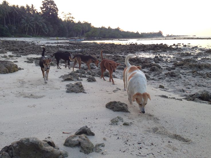 Havelock dogs