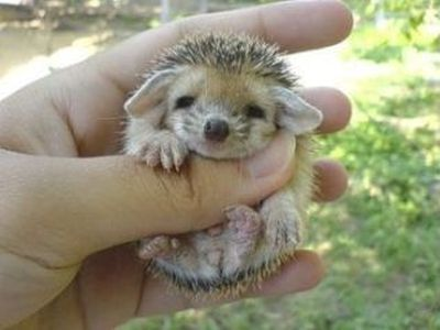 I don't know what this is but it's adorable!!