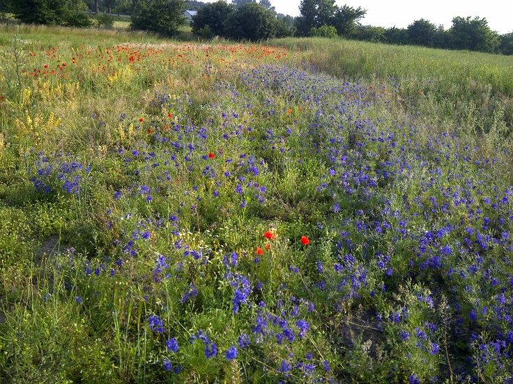 it starts with a meadow
