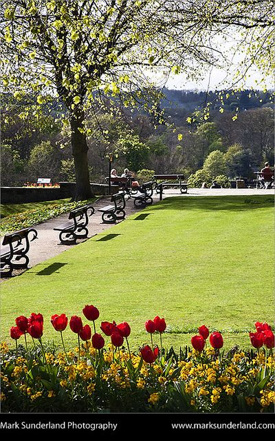 knaresborough castle grounds in spring knaresborough north yorkshire england
