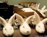 images about stop animal testing on pinterest animals stop animal