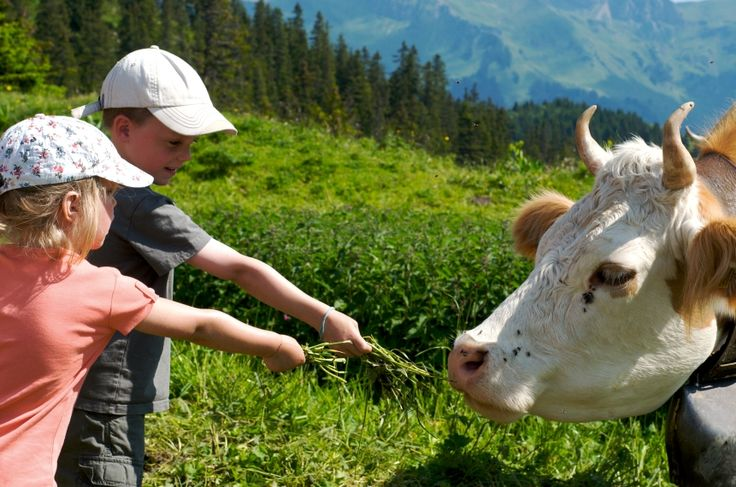 Discover farm animals  www.villars.ch