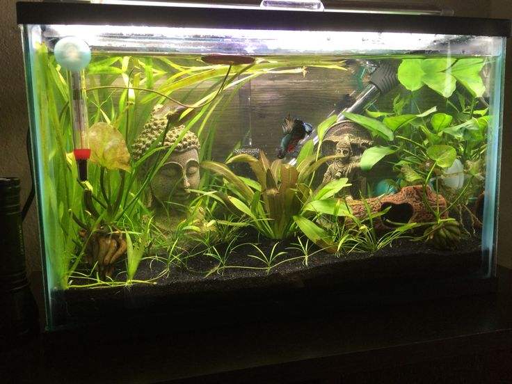 My 5 gallon betta tank heavily planted my aquariums for Betta fish tank size