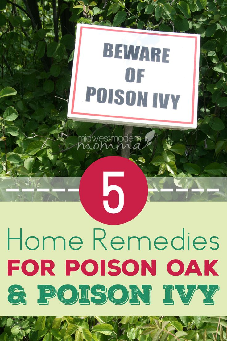 Home remedies for poison oak and poison ivy are needed much more often than we like. Skip the itchy, red, blistered skin with these five home remedies for poison oak or poison ivy!