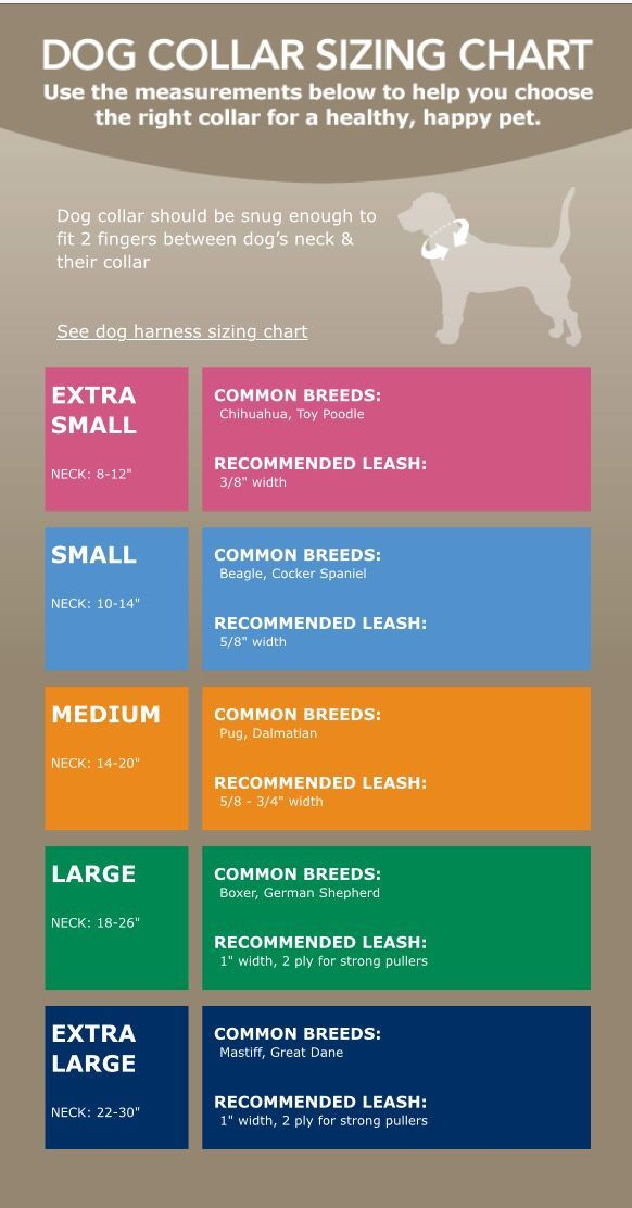 Dog collar sizing chart via petsmart.com