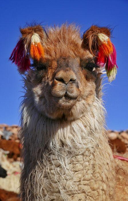 """Salar de Uyuni Tour 18"" ~ Bolivia   © 2015 Skip Hunt   skiphuntphoto.com + kaleidoscopeofcolor.com"