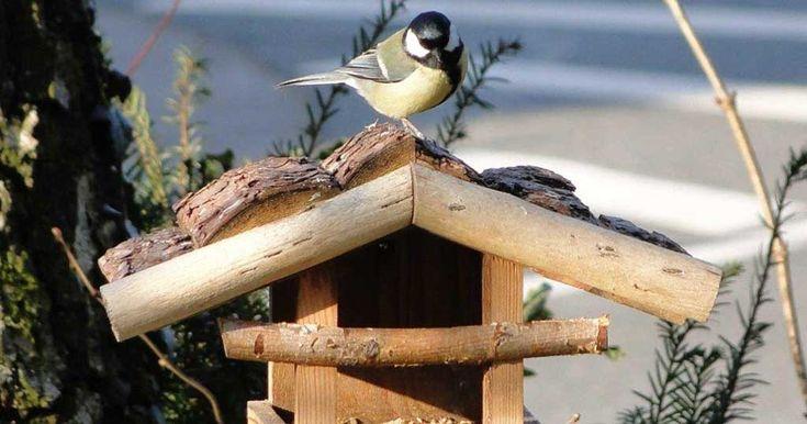 """Damit sich möglichst viele verschiedene Wildvogelarten an den sprichwörtlich """"gedeckten Tisch"""" setzen können, sollten sowohl Weich- als auch Körnerfresser passende Nahrung erhalten"""