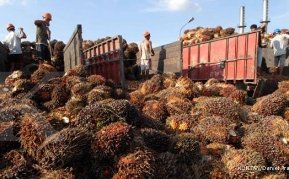 Saat ini baru satu pabrik kelapa sawit (PKS) di Indonesia yang dimiliki petani secara swadaya. Sedikitnya pabrik sawit swadaya disebabkan karena besarnya investasi pendirian pabrik tersebut. Oleh karena itu perlu cara lain agar petani lebih berkontribusi. Asosiasi Petani Kelapa Sawit Indonesia (APKASINDO) menyebut, salah satu cara agar petani lebih berkontribusi dalam pengolahan kelapa sawit adalah memiliki pabrik pengolahan