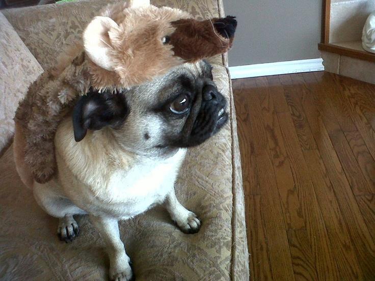lulu in costume!