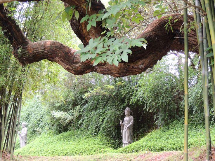 Buddhist Garden #ameni #amenimario