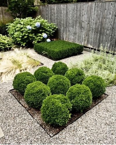 17 best ideas about townhouse garden on pinterest small for Green bushes for landscaping