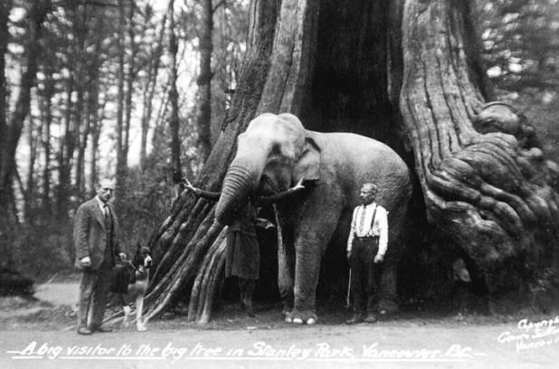 One of Vancouver's oldest tourist attractions, Stanley Park's historic hollow tree