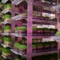 Indoor vertical farming, including technology by Urban Produce, may be the answer to increasing food scarcity.