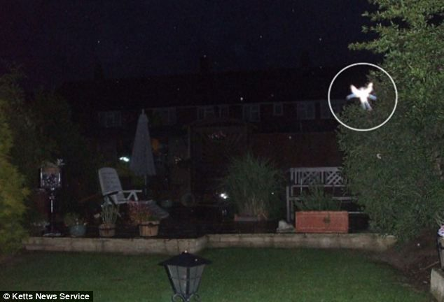 In 2009, Phyllis Bacon, 55, believed she took a photo of a fairy at the bottom of her gard...