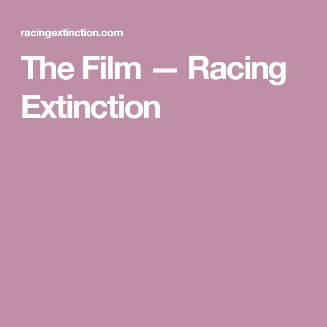 The Film — Racing Extinction