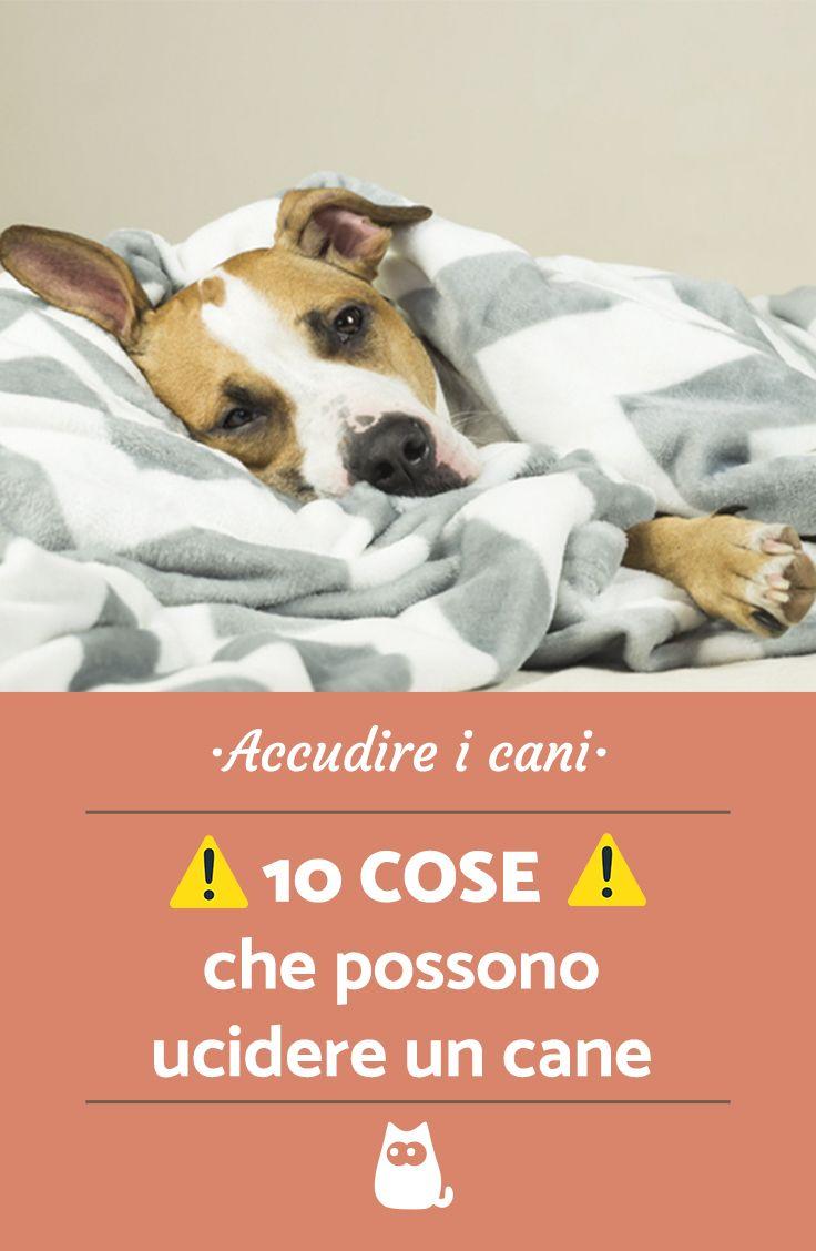 10 Cose Che Possono Uccidere Un Cane Pets Dogs Dog Cat E Il Cane