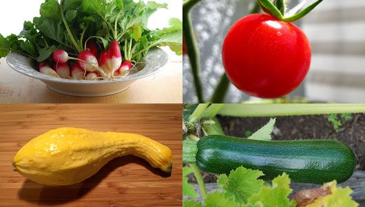 Good ideas/hints on easy vegetables to grow next spring