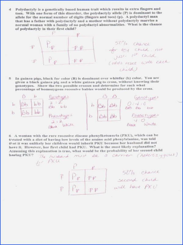 Dihybrid Cross Worksheet Answers Awesome 15 Best Of ...