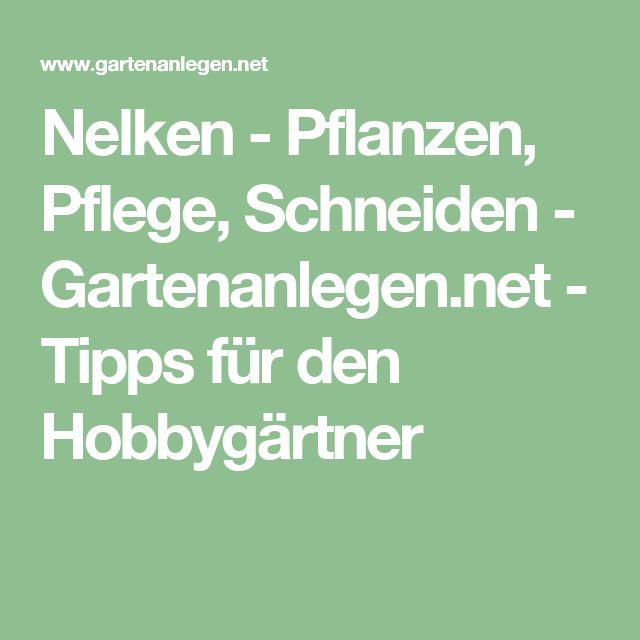 Nelken - Pflanzen, Pflege, Schneiden - Gartenanlegen.net - Tipps für den Hobbygärtner
