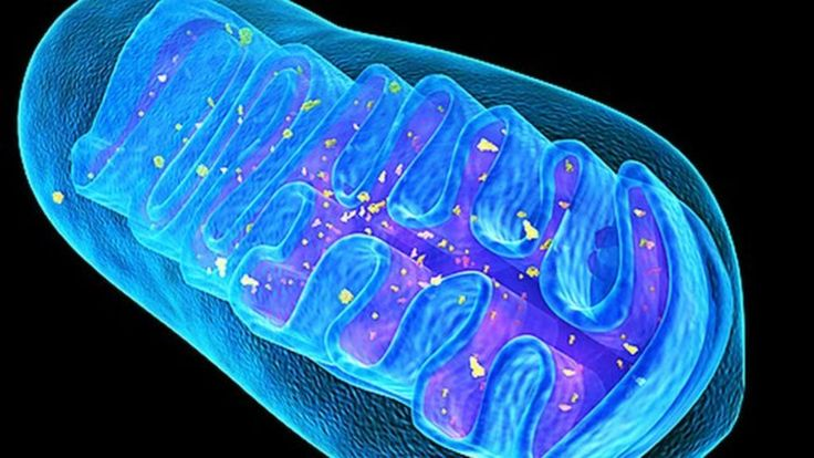 Researchers develop a technique to edit out bits of mitochondrial DNA that could otherwise pass on incurable diseases, a study in mice shows.