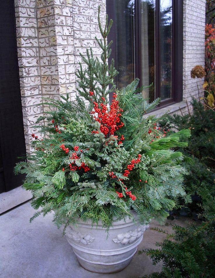Зимние композиции для садовых контейнеров являются идеальным решением, если вы хотите добавить цвета, придать интерес или украсить ...