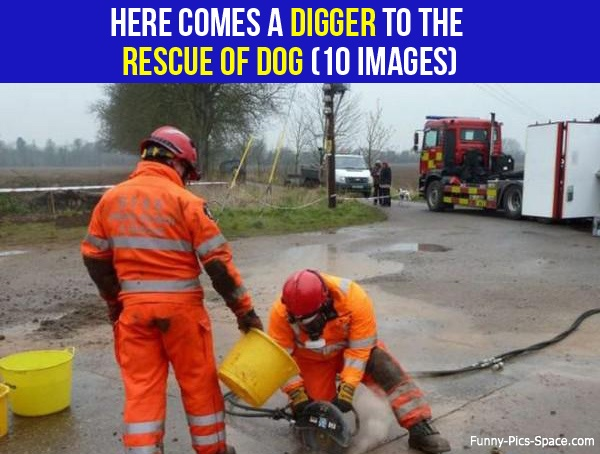 Here Comes A Digger To The Rescue Of Dog (10 IMAGES)   When one poor Jack Russell got stuck in a neglected pipe for four days, his owner was forced to hire a digger to get him out.