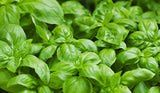 How to preserve fresh basil: blanch the leaves for 2 seconds, dunk in ice water, pat dry and freeze in a single layer