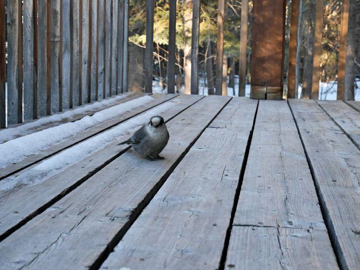 De la belle visite matinale au Little Atlin Lodge | Yukon, Canada