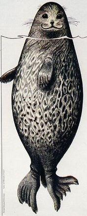 Image result for erik bruun seal