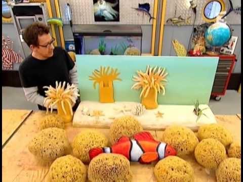 C'est pas sorcier - Les aquariums