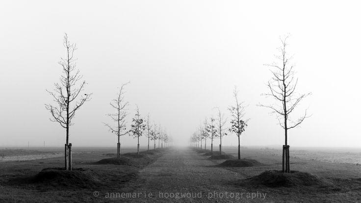 bomen, almere overgooi, ruimtelijke ordening #myeyeonlandscape #mijnbeeldvanruimte ©annemariehoogwoudphotography