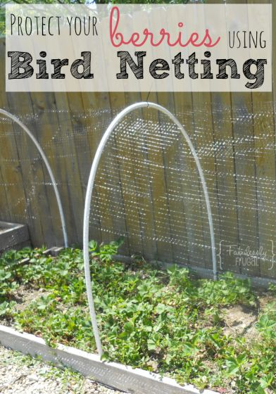 Keep the Birds out & your Berries in! Tutorial on how to do a bird netting for your berry patch.