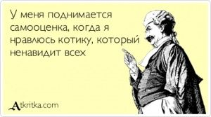 Аткрытка №383996: У меня поднимается  самооценка, когда я  нравлюсь котику, который  ненавидит всех - atkritka.com
