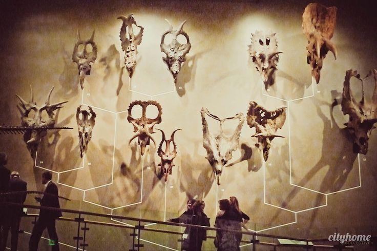 Utah Museum of Natural History - Salt Lake City