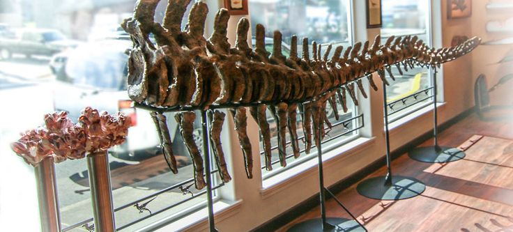 Prehistoric Gift Shop, Lincoln City, Oregon. About Prehistoric Oregon. Prehistoric provides an unique shopping and learning experience in Lincoln City, Oregon. Show-casing the finest minerals, fossils and meteorites.  If you need a conversation piece for your guests we have amazing museum quality pieces to hang in your home or business.  Do you want to enrich your child's learning, check out our array of excavation kits and other fun activities.  Come see our new break your own geode…