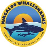 Whale Sharks Exmouth | Ningaloo Reef Dive Exmouth