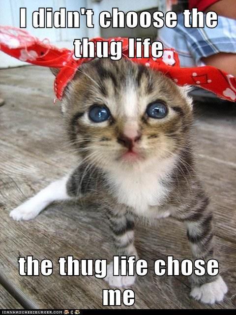 I didn't choose the thug life  the thug life chose me ( jessilyn i hope you laugh)