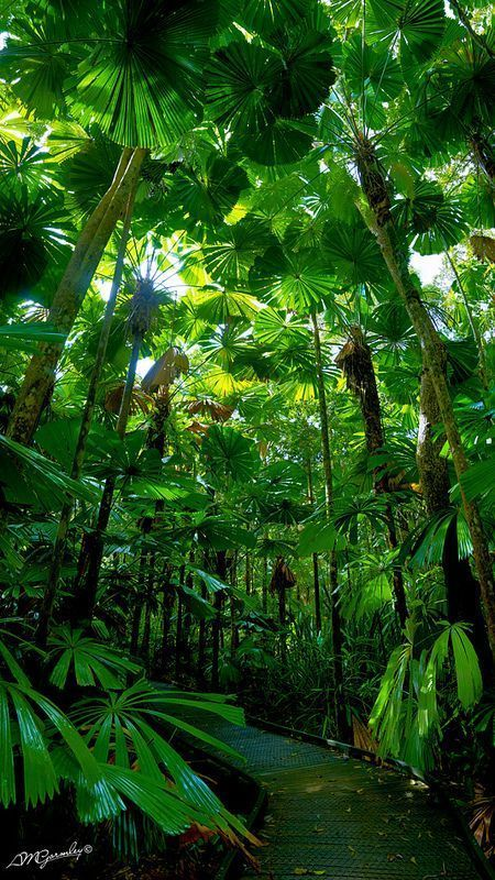 """""""Photo by AdamNoosa on flickr · The Daintree Rainforest in"""