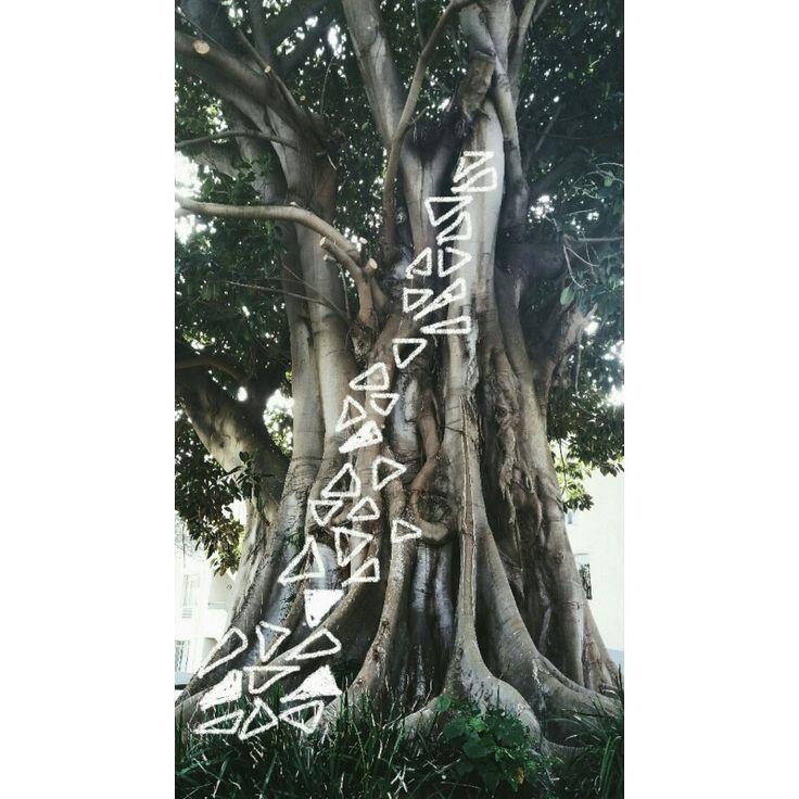 《 tree markings 》