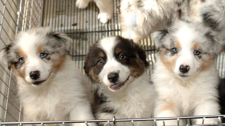 New California Law Requires Pet Stores Sell Only Rescue Animals https://trib.al/EMrvEah